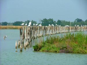 Excursion iles de la lagune Venise - Torcello