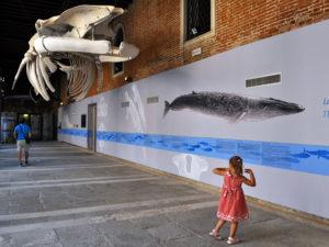 Venise avec des enfants Musee Histoires naturelles
