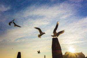 Liberté-Voyage-organisé-Venise