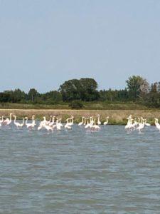 Flamant lagune venise